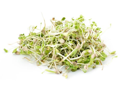 Todd's Seeds Countryside Delight Sprouting Seed Mix - Arugula, Dill, Cress, Clover, and Radish - One Pound