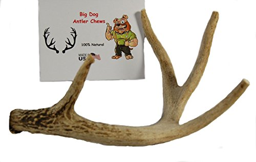Whitetail 12 Antler - 1