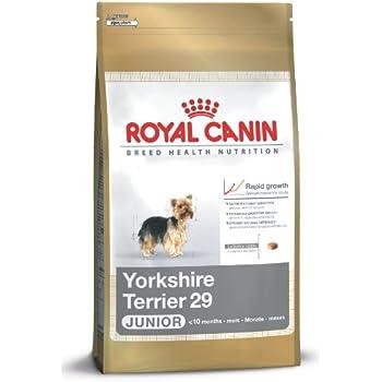 royal canin breed health nutrition yorkshire terrier adult dry dog food 10 pound. Black Bedroom Furniture Sets. Home Design Ideas