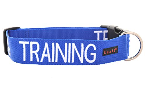 Training Blue Color Coded S M L XL Buckle Dog Collar Prevents Accidents By Warning Others of Your Dog in Advance (L-XL Collar 15-25