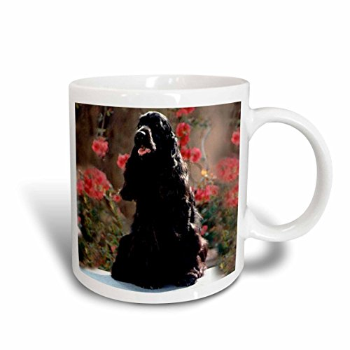 3dRose English Cocker Spaniel Black Mug, (Cocker Spaniel Mug)