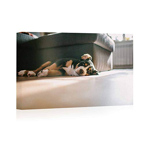 Actorstion Greater Mountain Swiss Dog Puppies Laying on The Floor Canvas Prints Wall Art,050489 Modern Home Decor Stretched and Framed Ready to Hang,12