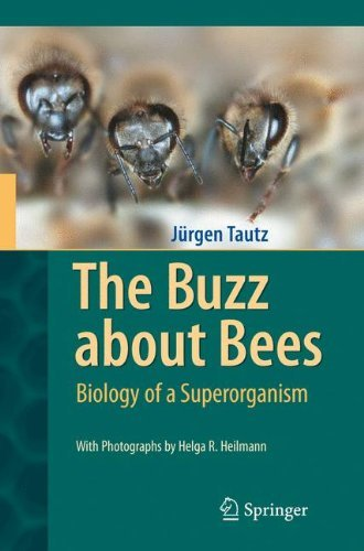 The Buzz about Bees: Biology of a Superorganism (E Tautz)