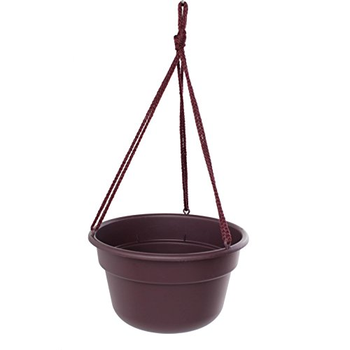 Bloem Dura Cotta Hanging Basket Exotica Planter (Pack of 12) 12in is 12.3 inches diameter x 6.7 inches high by Bloem
