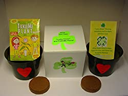 NEW! St. Patrick's Day TickleMe Plant Gift Box with FREE LUCKY CLOVER SHAMROCK Seeds. The TickleMe Plant will close its leaves when you Tickle it or blow it a Kiss!
