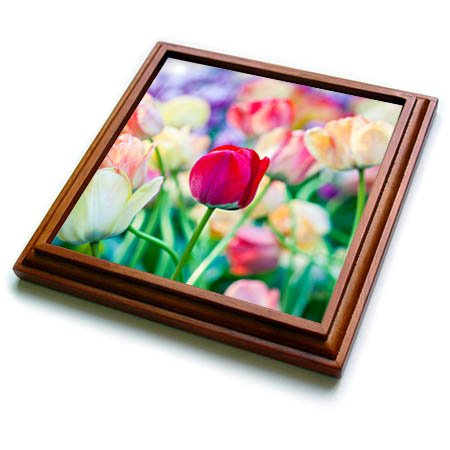 3dRose trv_276010_1 Red Tulip Trivet with Tile, 8 by 8''