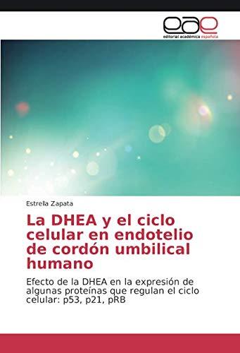 La DHEA y El Ciclo Celular En Endotelio de Cordon Umbilical ...