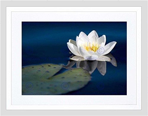 Water Lily PAD Flower Pond Reflection Black Framed Art Print Picture B12X9308