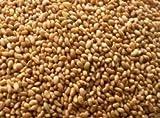 Alfalfa Seed, Whole - Wild Craftedally Grown - Medicago sativa (454g = One Pound) Brand: Herbies Herbs