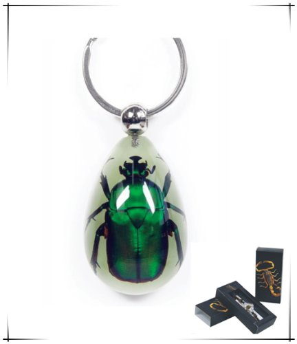 Real Green Rose Chafer Beetle Keychain (Glow-in-the-dark) ()