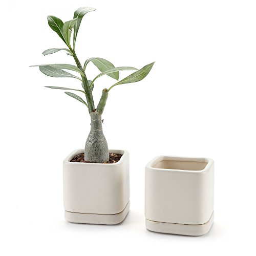 T4U 3 Inch Ceramic Square Cameo Brown Serial succulent Plant Pot/Cactus Plant Pot With Saucer Beige Package 1 Pack of (Brown Square Pot)