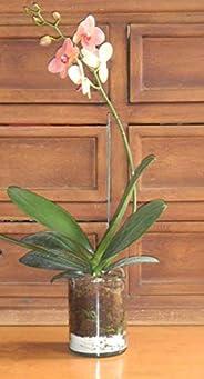 Maceta de autoriego Hidro+z en cerámica y vidrio orquídea