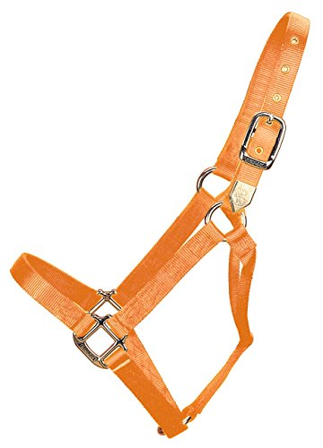 Web Halter (Hamilton 1-Inch Nylon Horse Halter, 800/1100-Pound, Mango Orange)