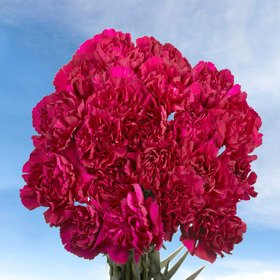 GlobalRose 200 Fresh Cut Purple Carnations - Fresh Flowers Wholesale Express Delivery by GlobalRose (Image #3)