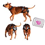 PABS Chastity Belt for Dogs - Pet Anti-Breeding System, Humane Birth Control Protects Against Breeding … (No Sani-T Pads + Delay Her Spay Storage Bag, XX-Large)