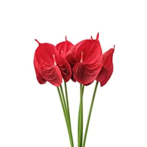 Meide Group USA 24″ Real Touch Latex Artificial Tropical Anthurium Lily Flowers for Home Decor (Pack of 6) (Red)