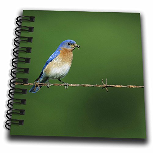 3drose-danita-delimont-bluebird-eastern-bluebird-male-on-barbed-wire-fence-with-food-illinois-mini-n