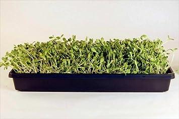 Amazoncom Deluxe Microgreens Growing Kit Grow Micro Greens