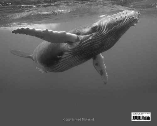 Beautiful-Whale