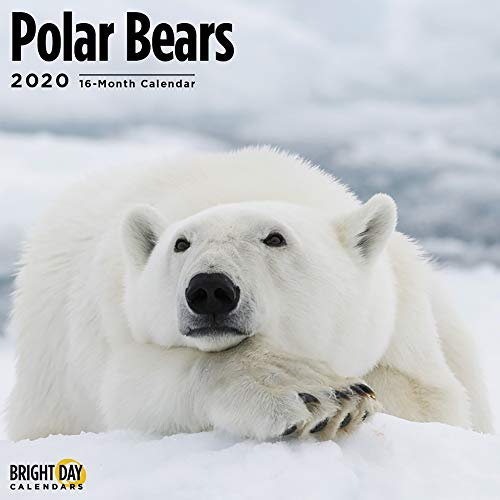 2020 Polar Bears Wall Calendar