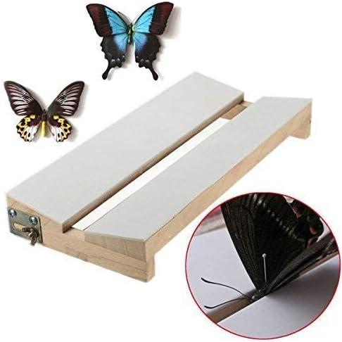ZT-TTHG 調節可能なV形状昆虫蝶を実装基板ソリッドウッドの羽を広げ