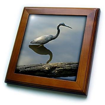 3dRose ft/_7359/_1 My Blue Heron-Framed Tile 8 by 8-Inch