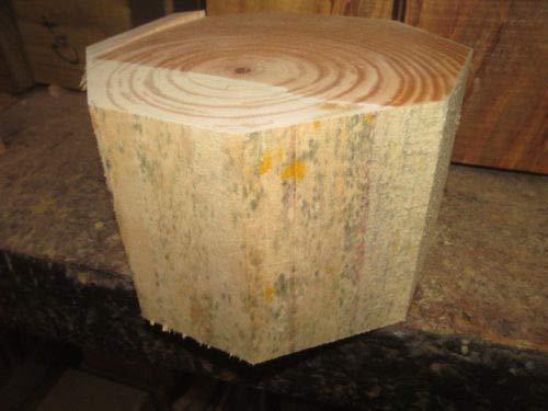 Exotic 10'' Norfolk Pine W/O Knot Ring Bowl Blank Lathe Lumber Wood Turning by Lotus energy