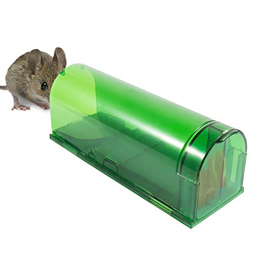how to use live catch mouse traps