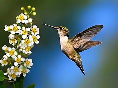 Gift Idea Hummingbird Flowers Nature Print Abstract