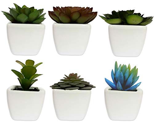 Lodhi's Artificial Succulent Assorted Decorative Faux Succulent Fake Plants with White Ceramic Pots -Pack of 6