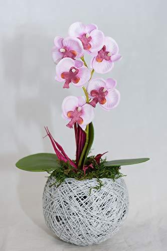 Orquídea en una olla redonda - decoración de mesa con flores ...