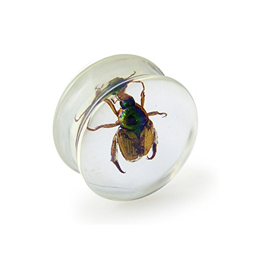 18MM Actual Organic Beetle Inlay Poly Resin Saddle Plug Piercing jewelry