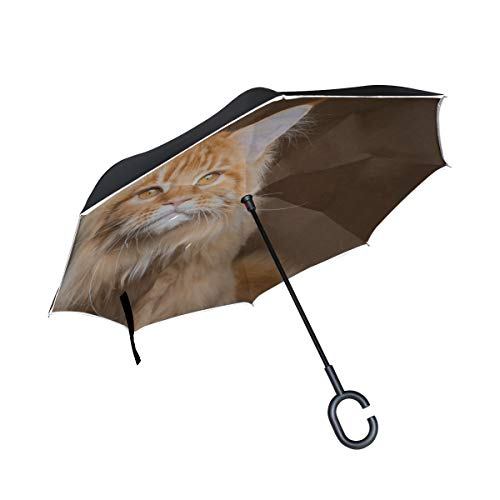 Rh Studio Inverted Umbrella Rain Sun Car Reversible Umbrella Maine Coon Cat Red Muzzle Large Double Layer Outdoor Upside Down Umbrella with Women with Uv Protection C-Shaped Handle