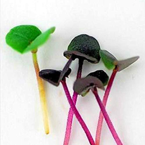 Deluxe Exotic Microgreens Seed Assortment | 12 Non GMO Varieties Including Chia Tatsoi, Pak Choi, Cress And More | Add Some Exotic Highlights To Your Cooking by Handy Pantry (Image #2)