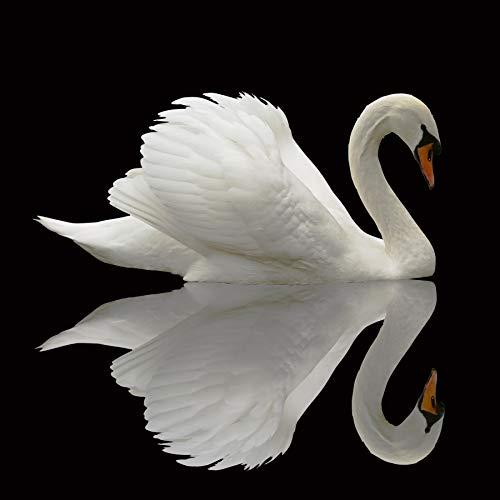 Yeele 8 x 8フィート 白鳥の背景 野生のエレガンス/ネットバード背景 写真撮影用 子供 大人用 写真ブース撮影 ビニールスタジオ小道具   B07JF2J8BJ
