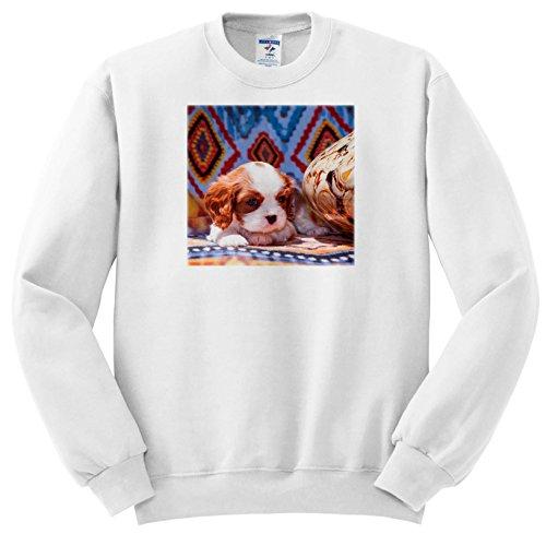 Danita Delimont - Puppies - Cavalier King Charles Spaniel Puppy, Mr - Sweatshirts - Youth Sweatshirt Large(14-16) ()