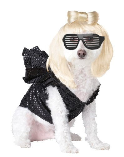 Pop Sensation Dog Costumes (LADY DOGGA - POP SENSATION DOG COSTUME - LARGE)