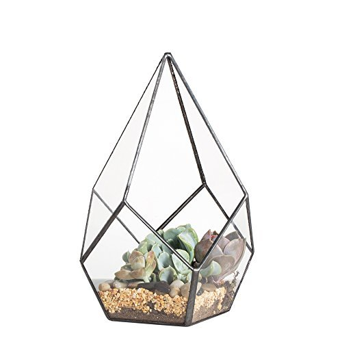 NCYP Modern Artistic Clear Glass Geometric Terrarium Four-Surfaces Diamond Succulent Fern Moss Air Plant Flower Pot Office Desktop Box Window Display Planter for Wedding Decoration