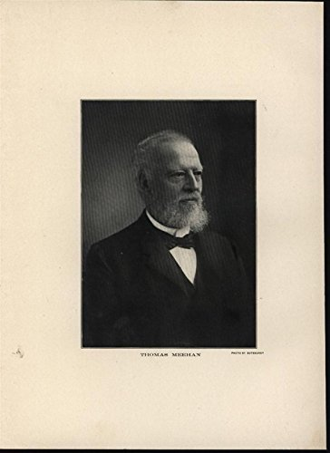 Thoms Meehan British Botanist 1900 antique portrait - Portrait Antique 1900