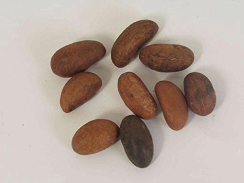 African Kola Nut - African Bitter Kola Nuts 0.5lbs