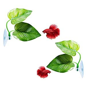 CousDUoBe Betta Fish Leaf Pad – Improves Betta's Health by Simulating The Natural Habitat( Double Leaf Design, one Big…