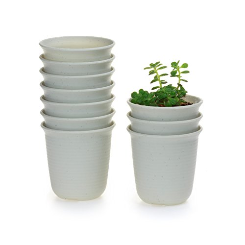 T4U 2.5 Inch Plastic Round Succulent Plant Pot/Cactus Plant Pot Flower Pot/Container/Planter Package 1 Pack of 10