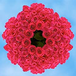 250 Fresh Cut Hot Pink Roses for Valentine's Day | Versilia Roses | Fresh Flowers Express Delivery | The Perfect Valentine's Day Gift