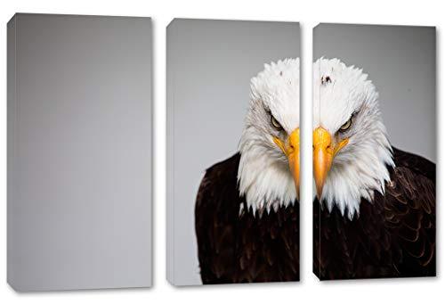 Bald Eagle Portrait - 5