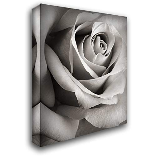 Rose 47x60 Extra Large Gallery Wrapped Stretched Canvas Art by Meyers, Steven N.