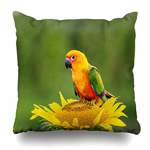 Bright Parrot Green - Ahawoso Throw Pillow Cover Coloured Blue Beak Parrot Nature Tail Green Bird Bright Conure Endangered Exotic Design Home Decor Pillow Case Square Size 16x16 Inches Zippered Pillowcase