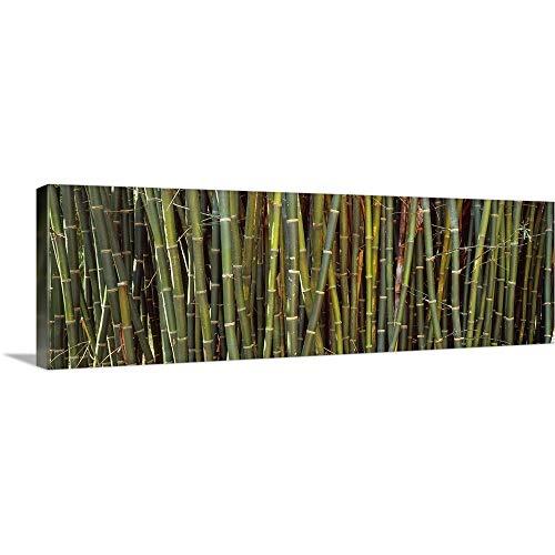 GREATBIGCANVAS Gallery-Wrapped Canvas Entitled Bamboos in a Garden Kanapaha Botanical Gardens Gainesville Florida by 48
