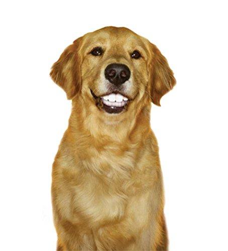 Pedigree Dentastix Fresh Biscuit Large Treats For Dogs  Pound