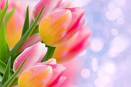 Amazon De Cu Rong Bunga Tulip Flower Kunstdruck Auf Leinwand
