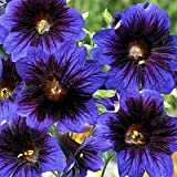 Salpiglossis Kew Blue 250 seeds
